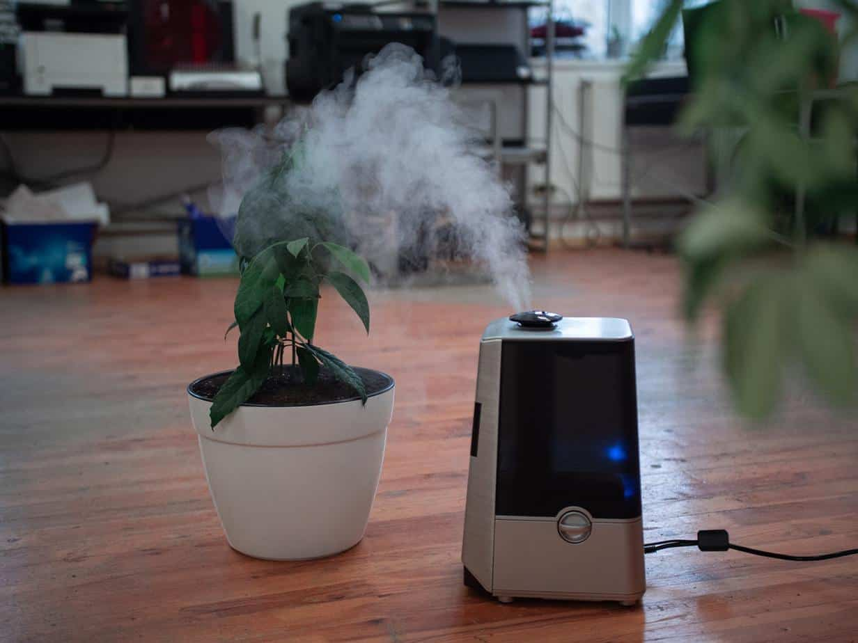 plant humidifier home
