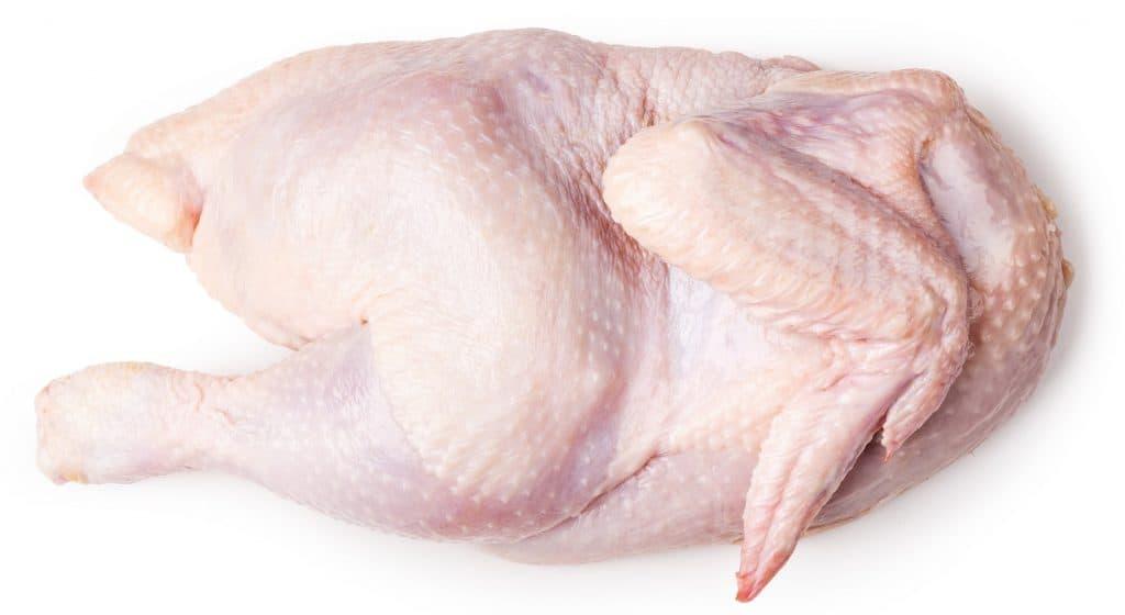 chicken protein